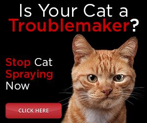 catspraystop